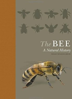 The Bee : a natural history